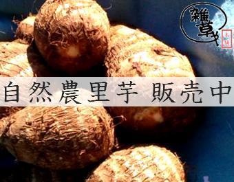 14satoimo_ban.jpg