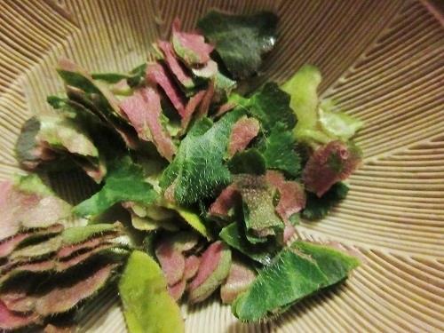 IMG_3350yukinoshita.JPG