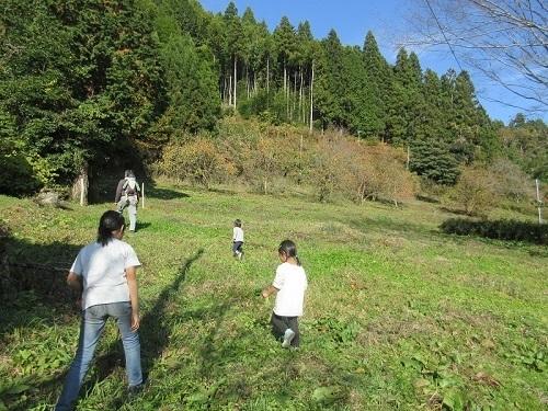 IMG_3284kaki_batake.JPG