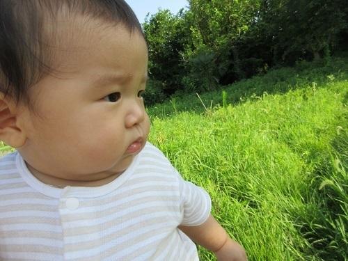 IMG_3918tsukuba_hatake_baby.JPG