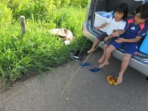 IMG_3919tsukuba_hatake_nekojarashi.JPG