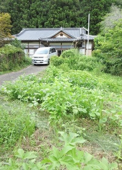 IMG_4005ie_daizu.JPG