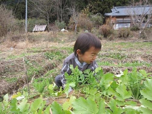 IMG_4077shizennou_daikon.JPG