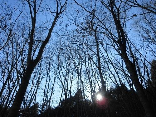 IMG_7273kuribayashi.jpg