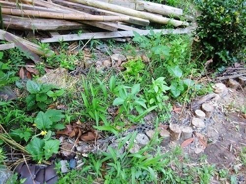 IMG_7968wooden_kitchen_garden.JPG