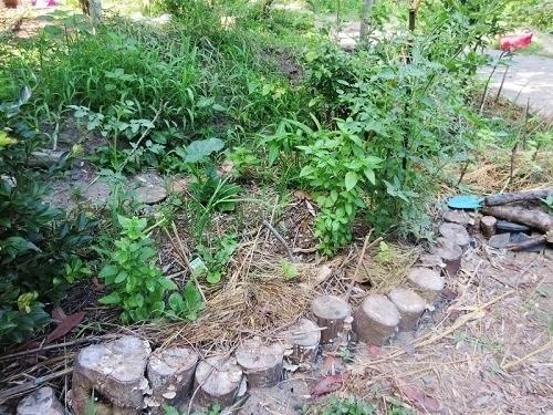 IMG_7969wooden_kitchen_garden.JPG