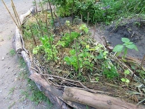 IMG_7971wooden_kitchen_garden.JPG
