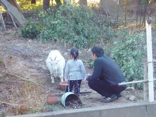 P1010124yagi_awako20130101.JPG