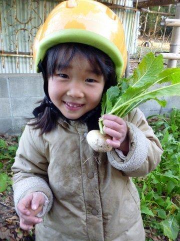 P1100865kabu_chi.JPG